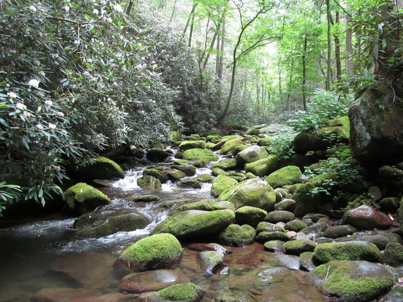 cabin vacations great smoky mountains